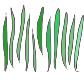 Verde Beans