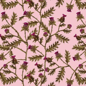 Thistle Bramble on Pink
