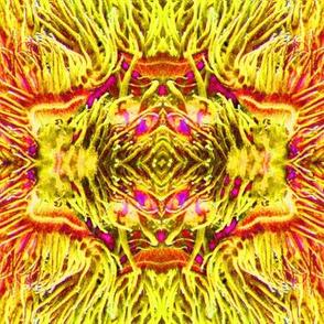 Yellow Anenome