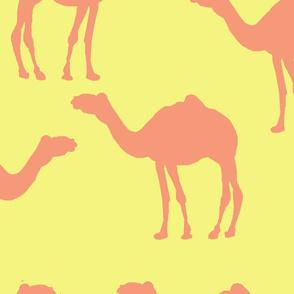 camel caravan coral