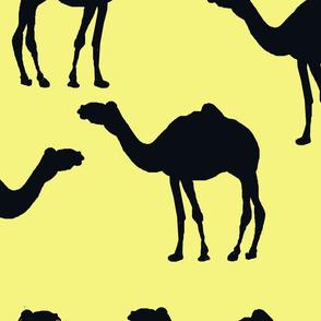 camel caravan indigo