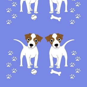 Tan White Jack Russell Blue