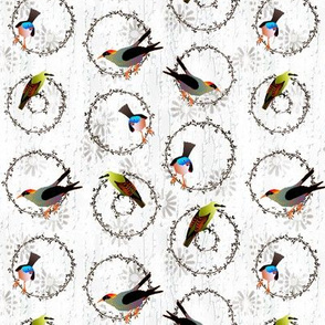 summer songbirds