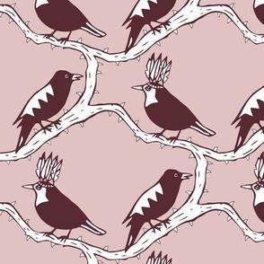 thorn birds pink purple