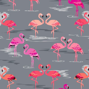flamingos love grey