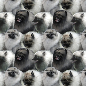 Keeshond faces