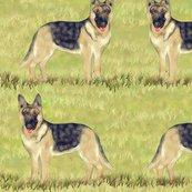 German_shepherd_on_grass_shop_thumb