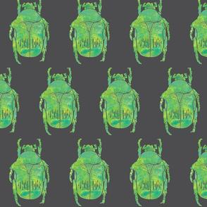 beetle on grey