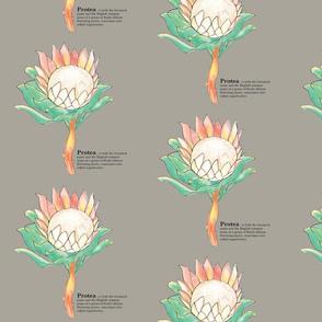 Protea-Sugarbush-Taupe-01-01-01