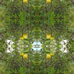 Lime Tree Sky Windows (Ref. 4253)