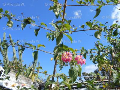 Leafy Sky Ladders (Ref. 4098)