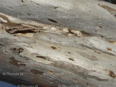 Elusive Wood Spirits (Ref. 4290)
