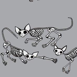 SphynxieBonez All Lined Up in Grey
