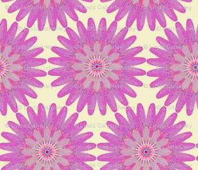 Pink kaleidoflower