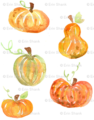 pumpkins and squash
