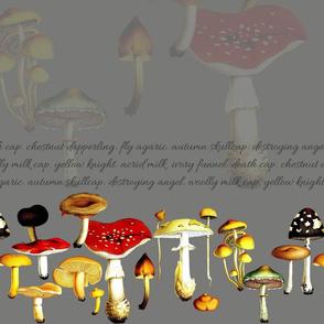 poison mushrooms (grey)