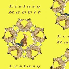 Rabbit Ecstacy