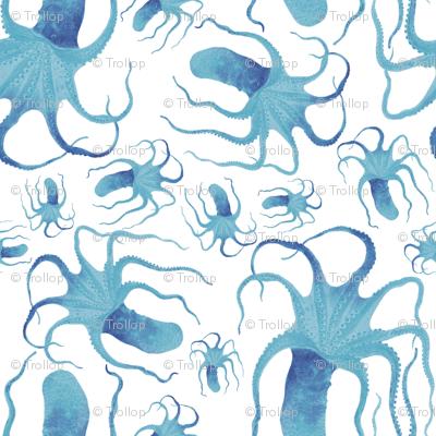 cephalopod rain