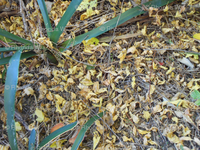 Carpet of Fallen Autumn Leaves (Ref. 4161)