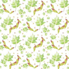 Bartram Leaves
