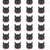 Skittles The Cat