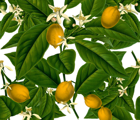 Lemon Botanical  fabric by peacoquettedesigns on Spoonflower - custom fabric