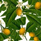 Rlemon_botanical___white__peacoquette_designs___copyright_2015_shop_thumb