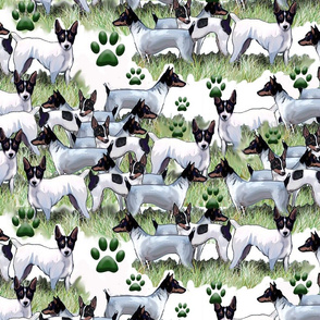 fox terrier collage