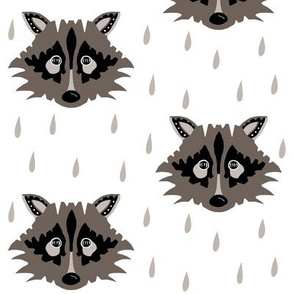 raccoon brown grey