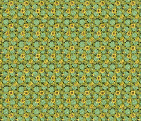 nasturtiums fabric by unseen_gallery_fabrics on Spoonflower - custom fabric