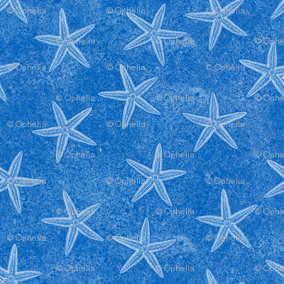 Starfish Aqua Blue