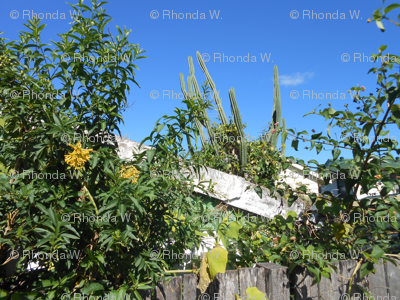 Sky Gardens - A Fantasy Garden View (Ref. 4012)