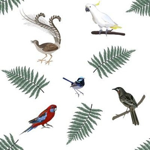 Birds of the Dandenong Ranges