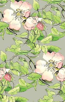 Wild Rose 1836 Var No. II