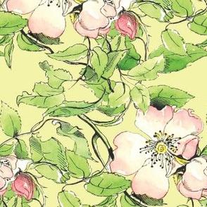 Wild Rose 1836 Var No. III