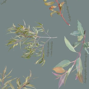 Eucalyptus foliage collection on Blue 788686