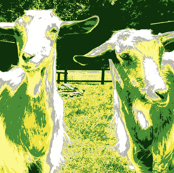 Goats - Its all about the ears - green