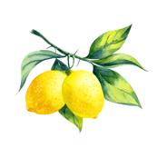 lemon one