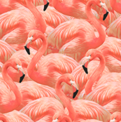 Flamingo Fever in Coral Half Scale
