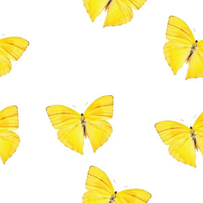 Botanical Elements, Yellow Moths