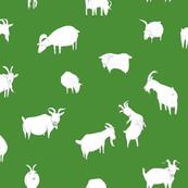 goat_open_spfl_green