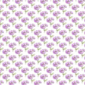 anemone_background