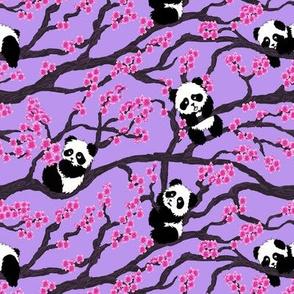 cherry panda