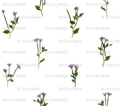 Pressed Purple Flowers