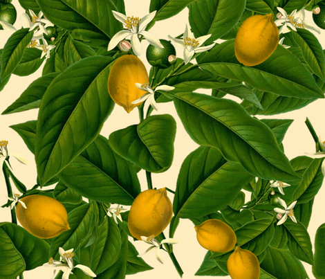 Lemon Botanical ~ Trianon Cream fabric by peacoquettedesigns on Spoonflower - custom fabric