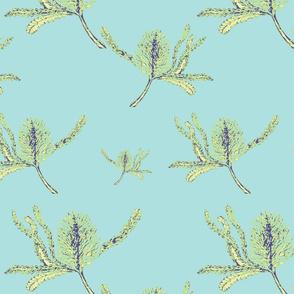 Banksia blue