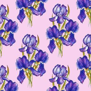 irises_pink_background_1800