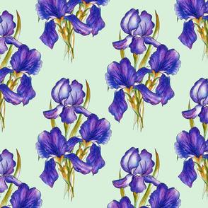 irises_green_background_1800