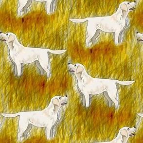 Labrador in golden grass