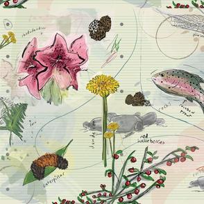 botanicalsketchbook